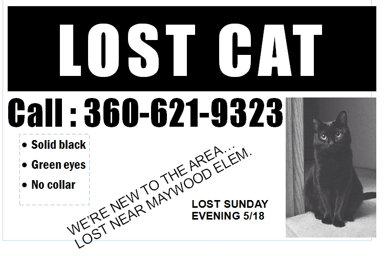 Cat Owner New To Bothell Has Lost Their Friend The