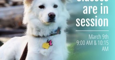 Dog Training Classes starting on March 9th in Bothell