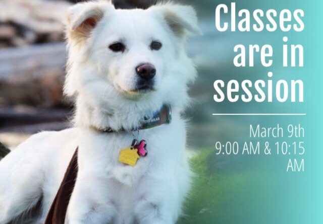 Bothell Dog Training Event