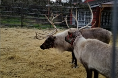 bothell-blog-reindeer-country-village-4