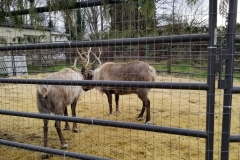 bothell-blog-reindeer-country-village-5