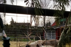 bothell-blog-reindeer-country-village